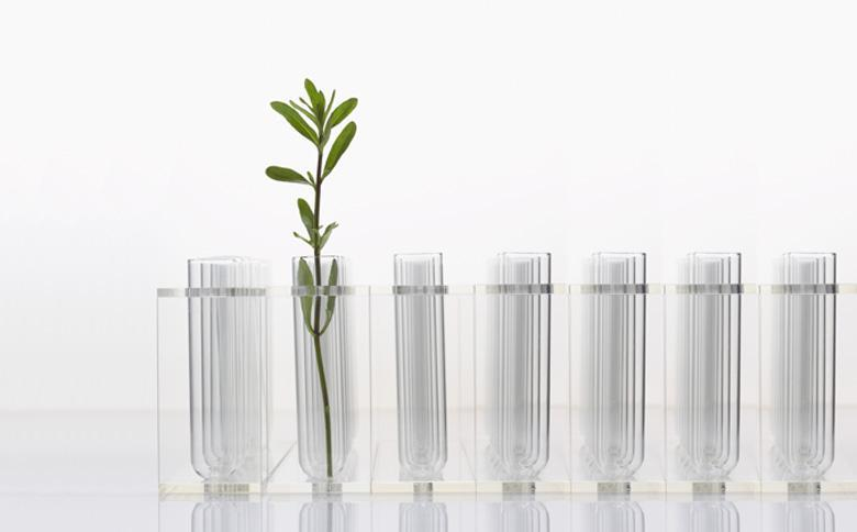 Pflanze in Reagenzgläsern