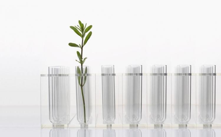 Eine Reihe gläserner Reagenzgläser vor weißem Hintergrund, nur eines sticht heraus, da ein grüner Zweig darin steckt.