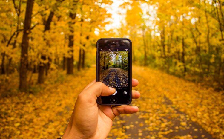 Mit Handy im Herbstwald
